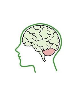 Cerebral Ataxia (SCA, SCD) cerebellar atrophy