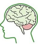 Спиноцеребеллярная атаксия, атрофия мозжечка